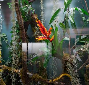 Asja Schubert - in natura terrarium