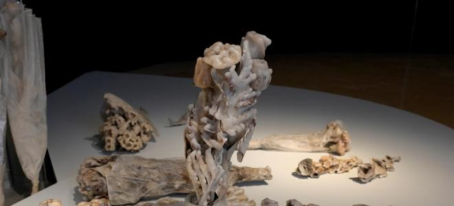 Karolin Bräg im Museum für Sepulkralkultur